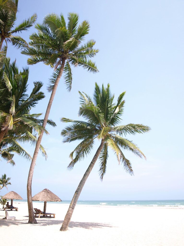 palm tree, sea view, beach