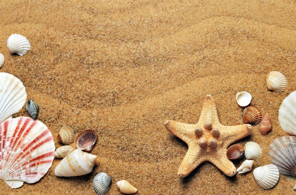 seashells, sand, beach